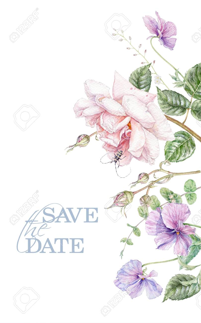 Watercolor wedding invitation with pink rose and violet flowers isolated on white background. Botanical border for natural cosmetics, women products packaging, summer background, greeting design - 134975309