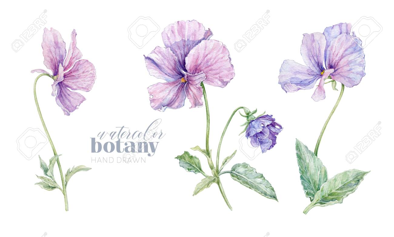 Watercolor violet flower set isolated on white - 138090213