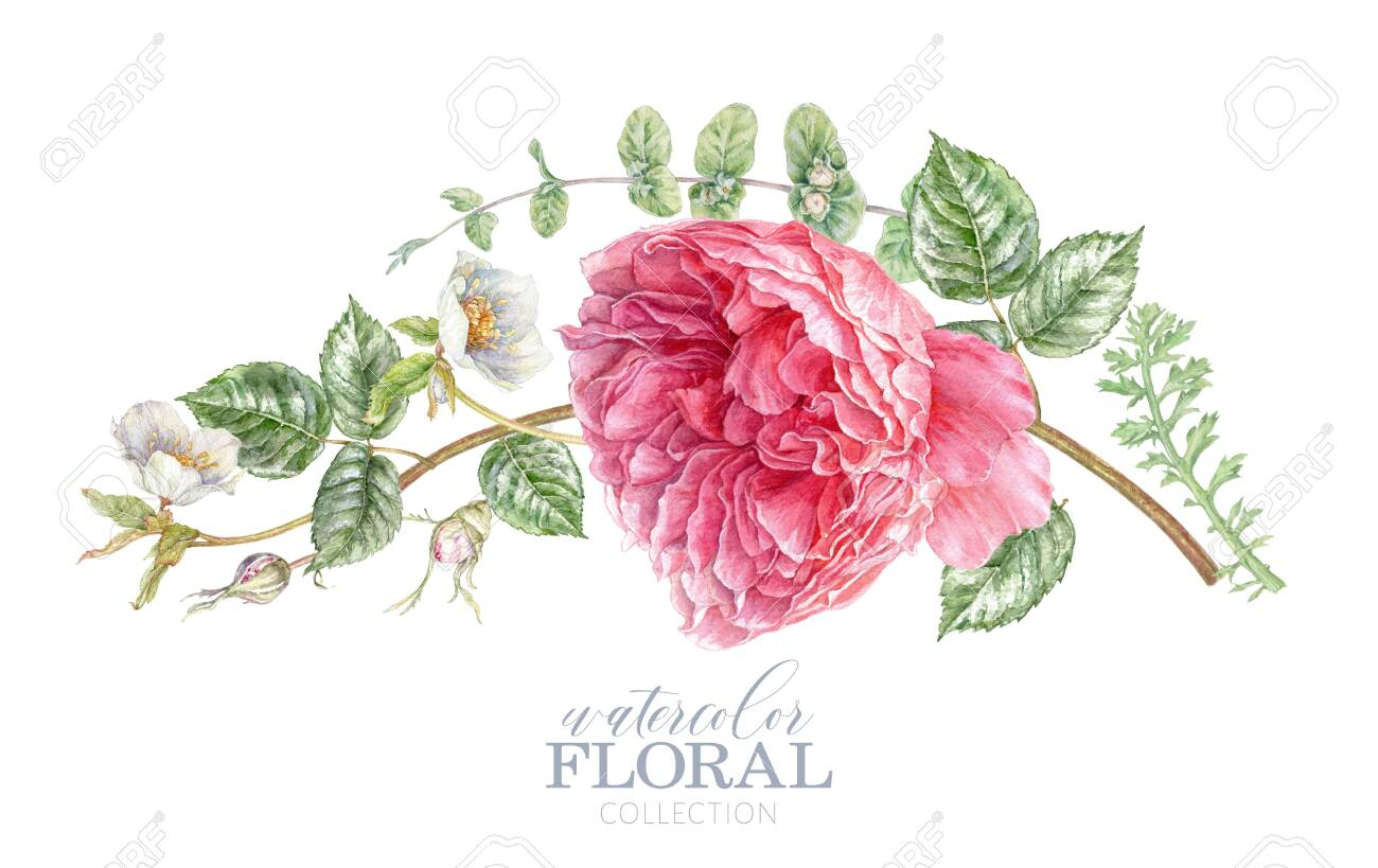 Watercolor card with pink rose and hellebore - 147094563