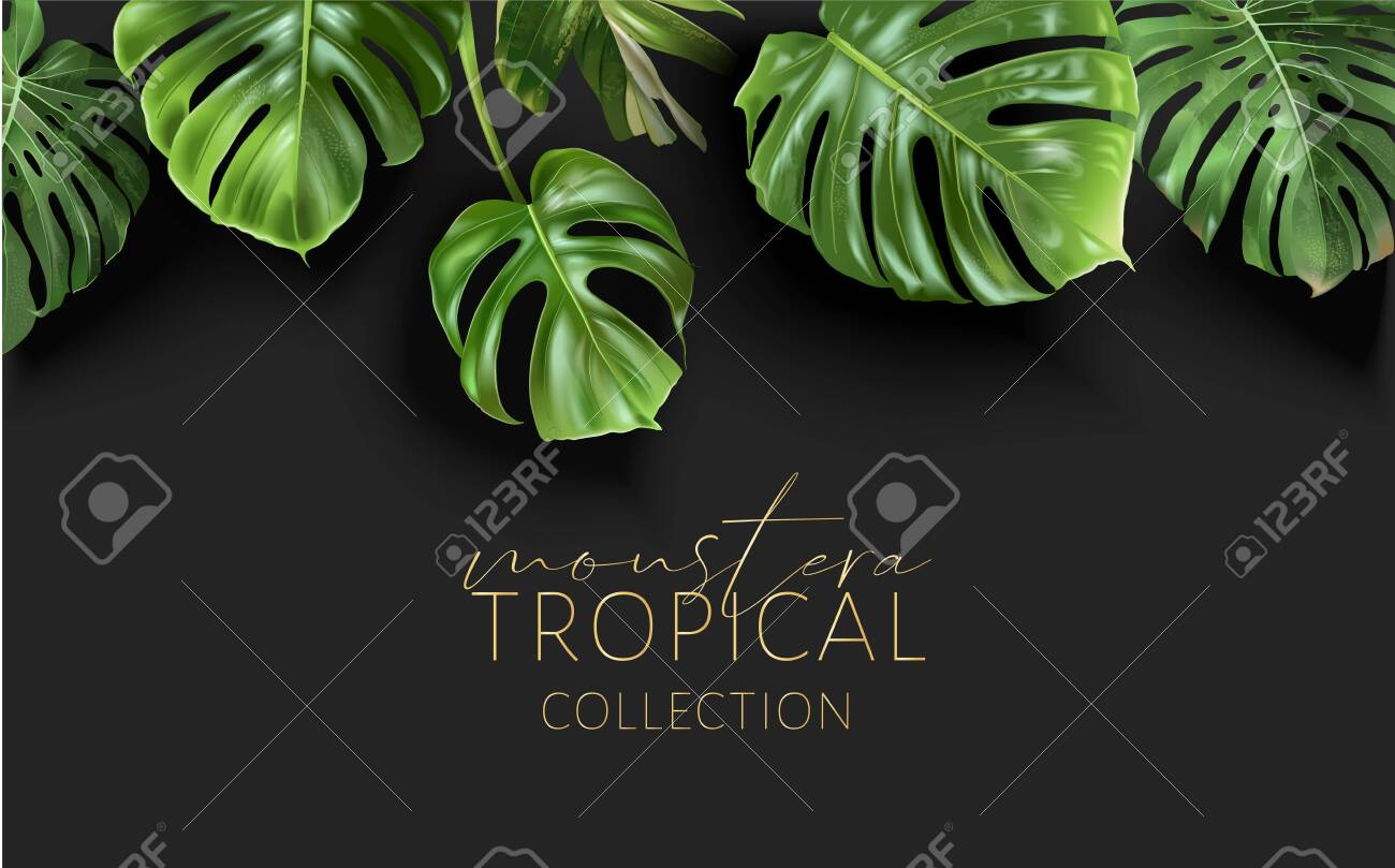 Vector monstera frame with green tropical leaves - 153377128
