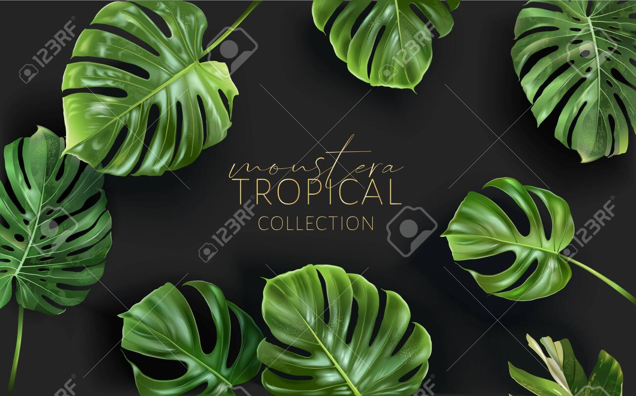 Vector monstera frame with green tropical leaves - 154013022