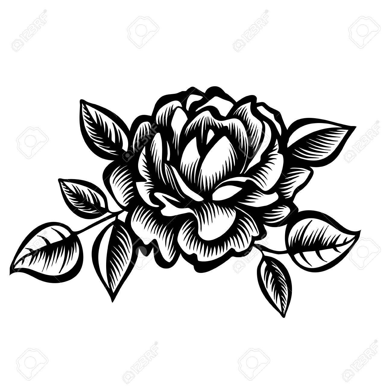 Vector Flor Rosa Blanco Y Negro Decorativo Peonía Estilizada