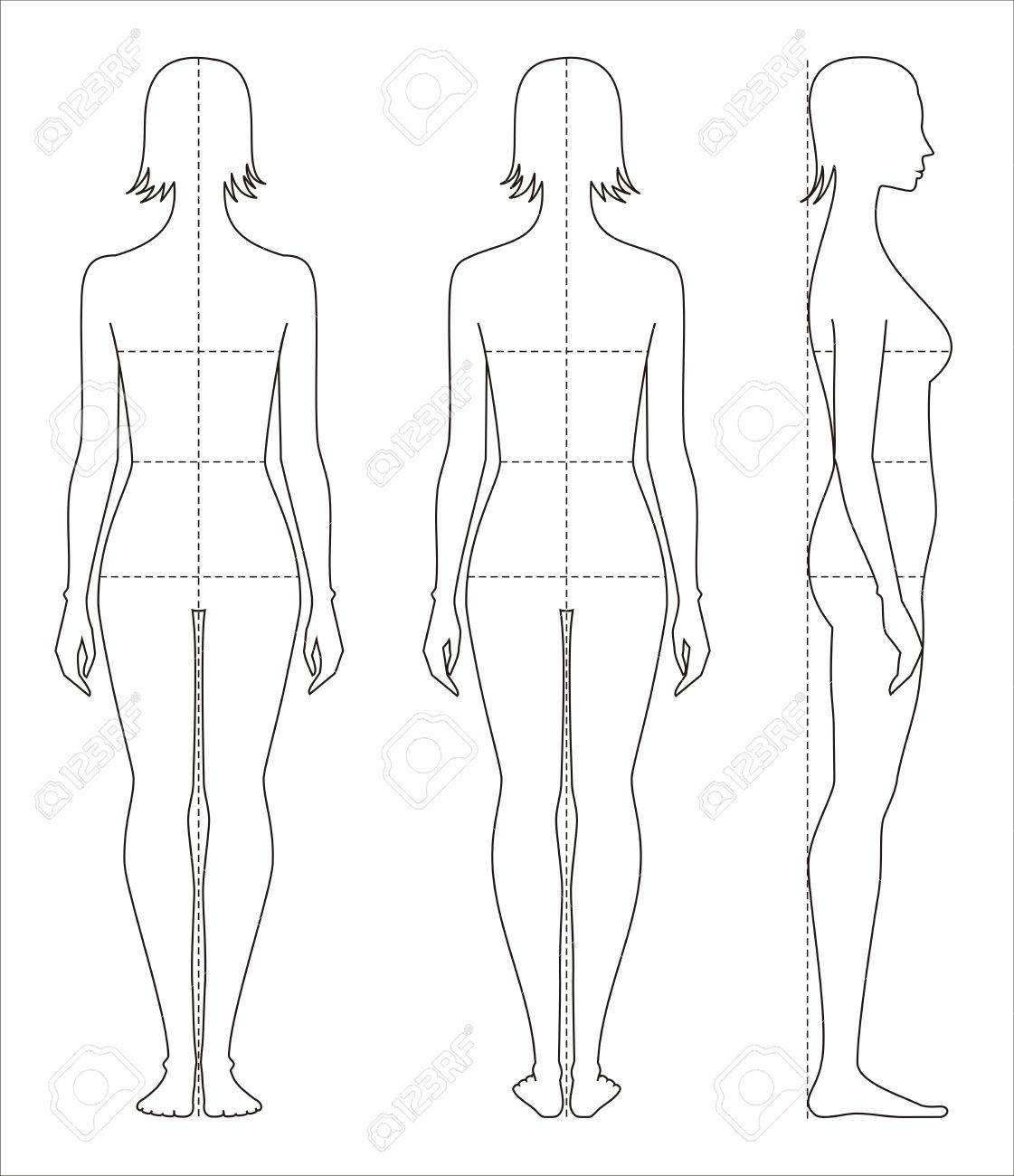 vector vector illustration of womens body proportions and measurements for clothing design and sewing
