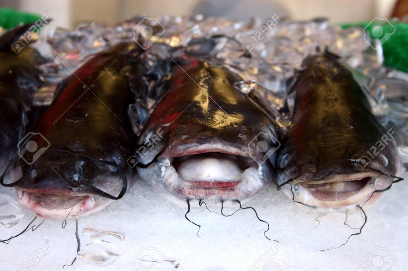 熱帯魚 冷たい