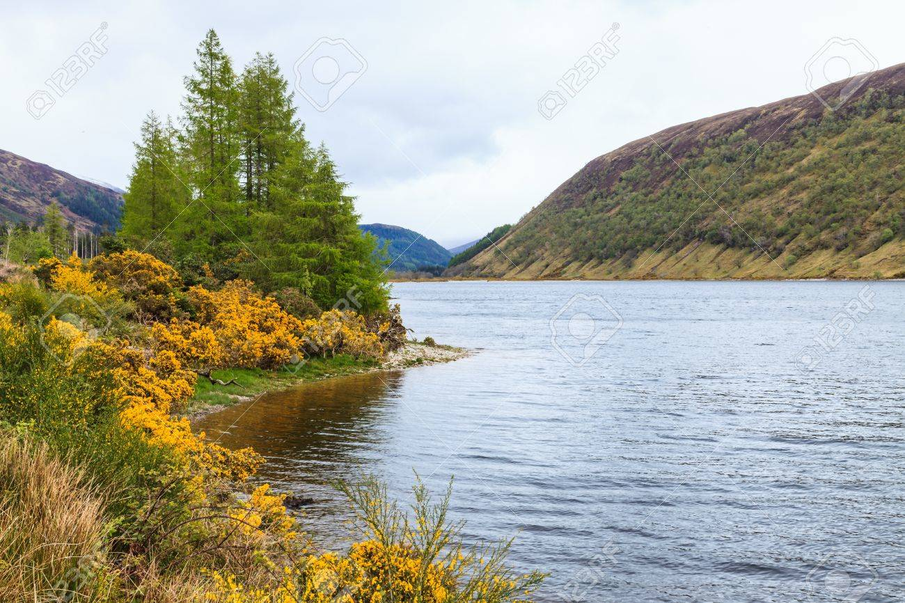 Colorful Yellow Flowers Along A Lake Side In Scotland Stock Photo