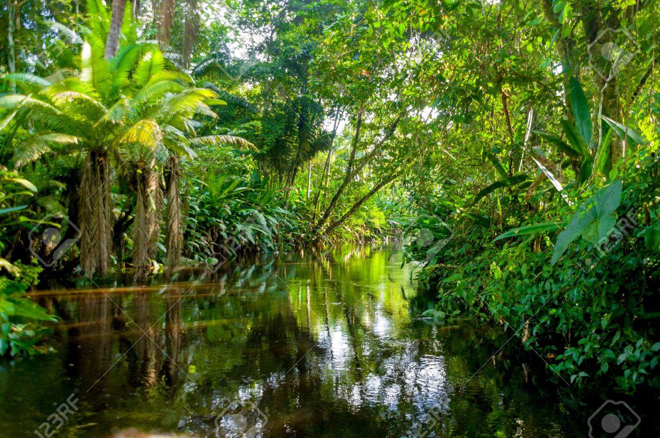 amazon rainforest trees clipart. amazon rainforest jungle trees clipart