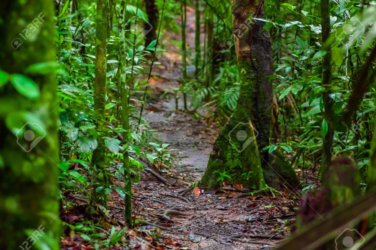 Path Inside Of The Amazon Rainforest Surrounding Of Dense