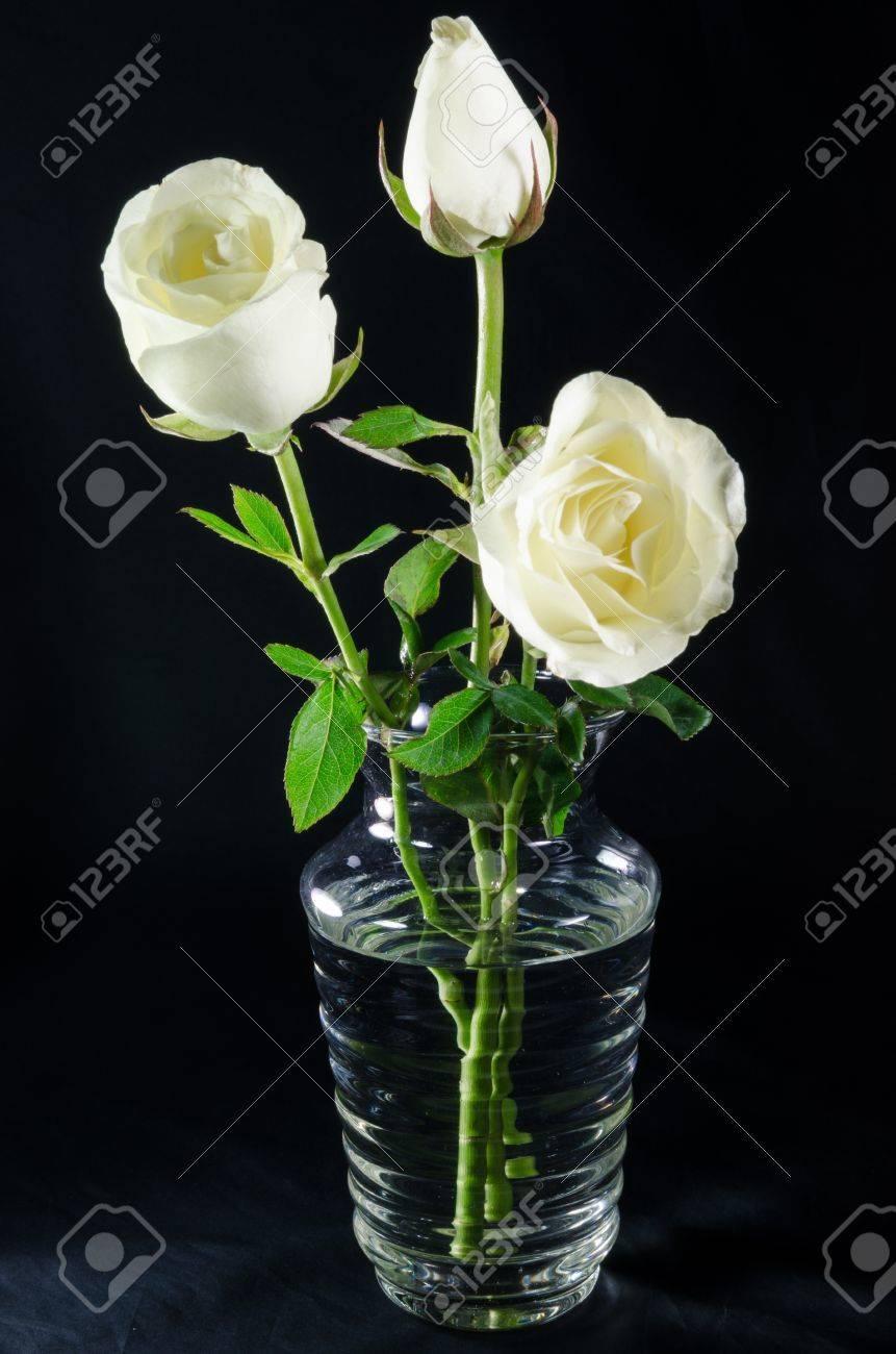 White roses in glass vase on black background stock photo picture stock photo white roses in glass vase on black background mightylinksfo