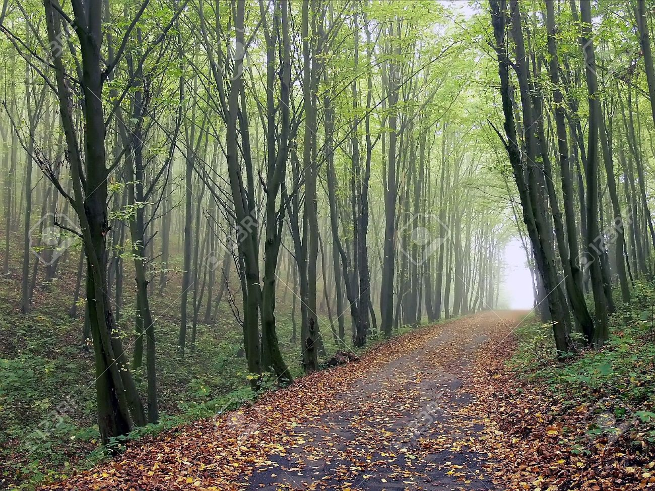 The road in the woods among the trees with fallen leaves in autumn Stock Photo - 6107999