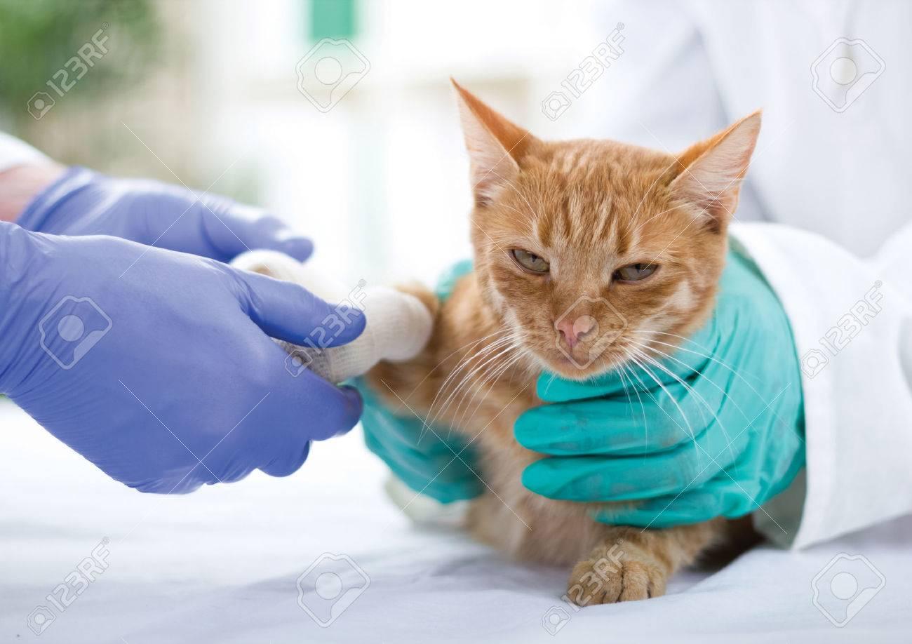 little cat with broken leg Banque d'images - 24365390