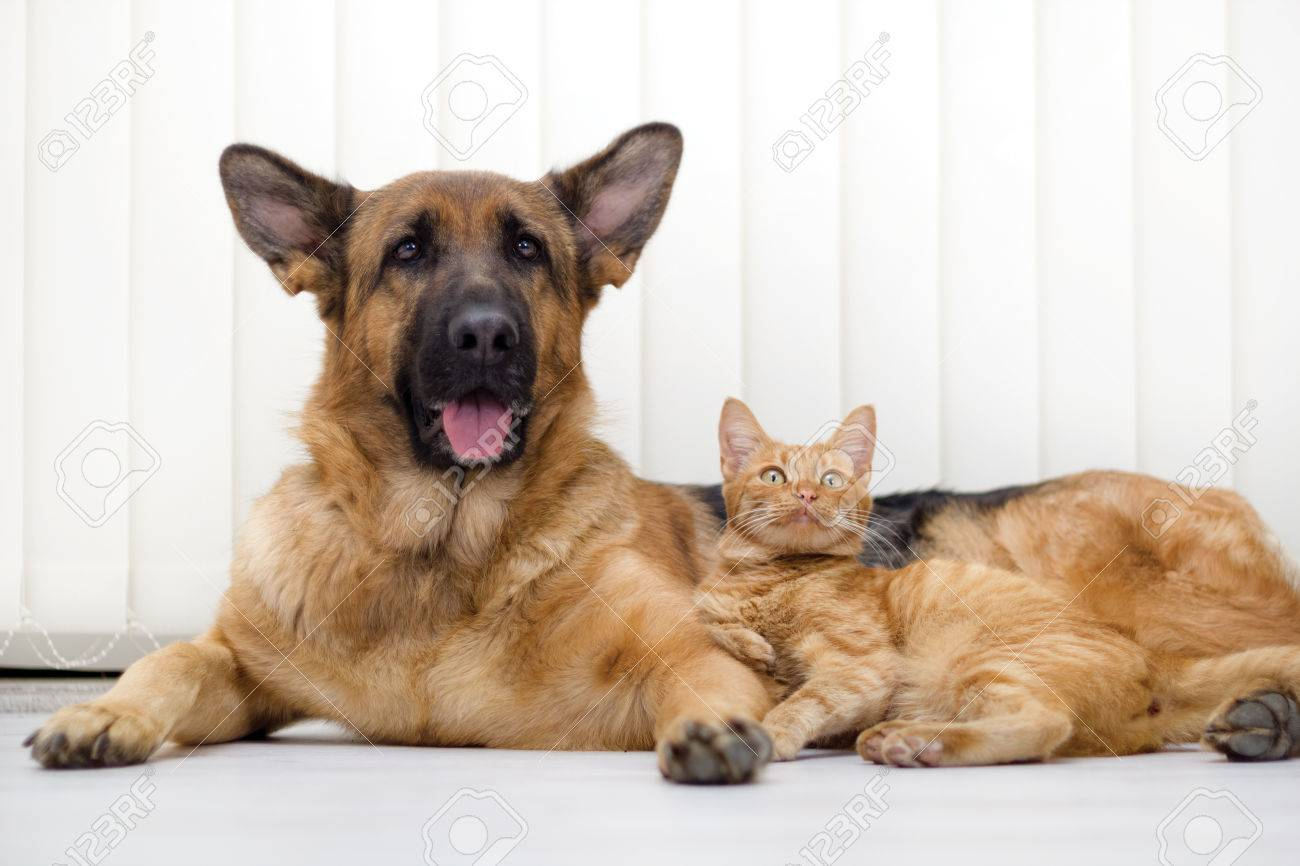 cat and dog together lying on the floor - 24365432