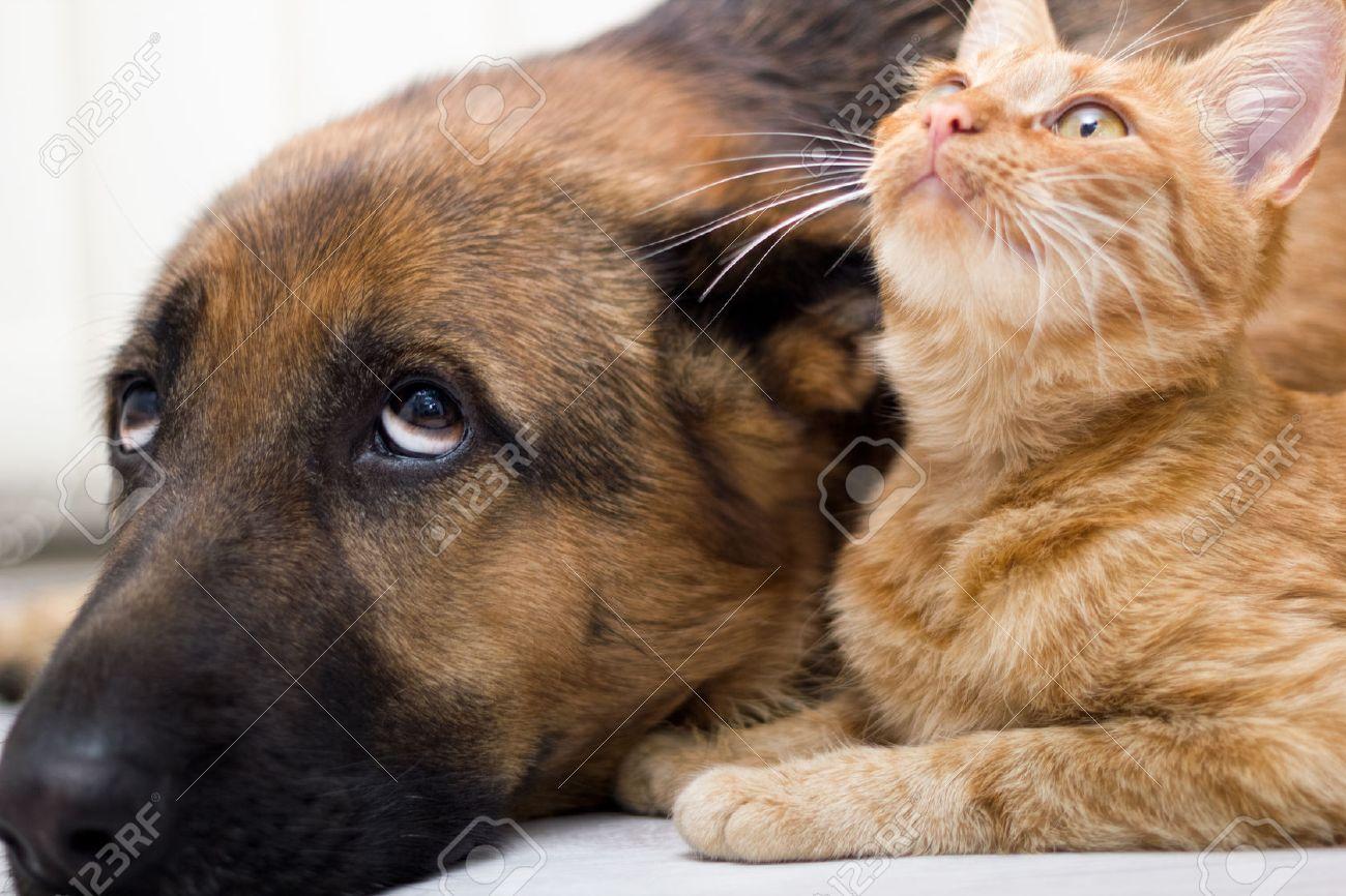 fermer chien et chat couché sur le plancher Banque d'images - 25988175
