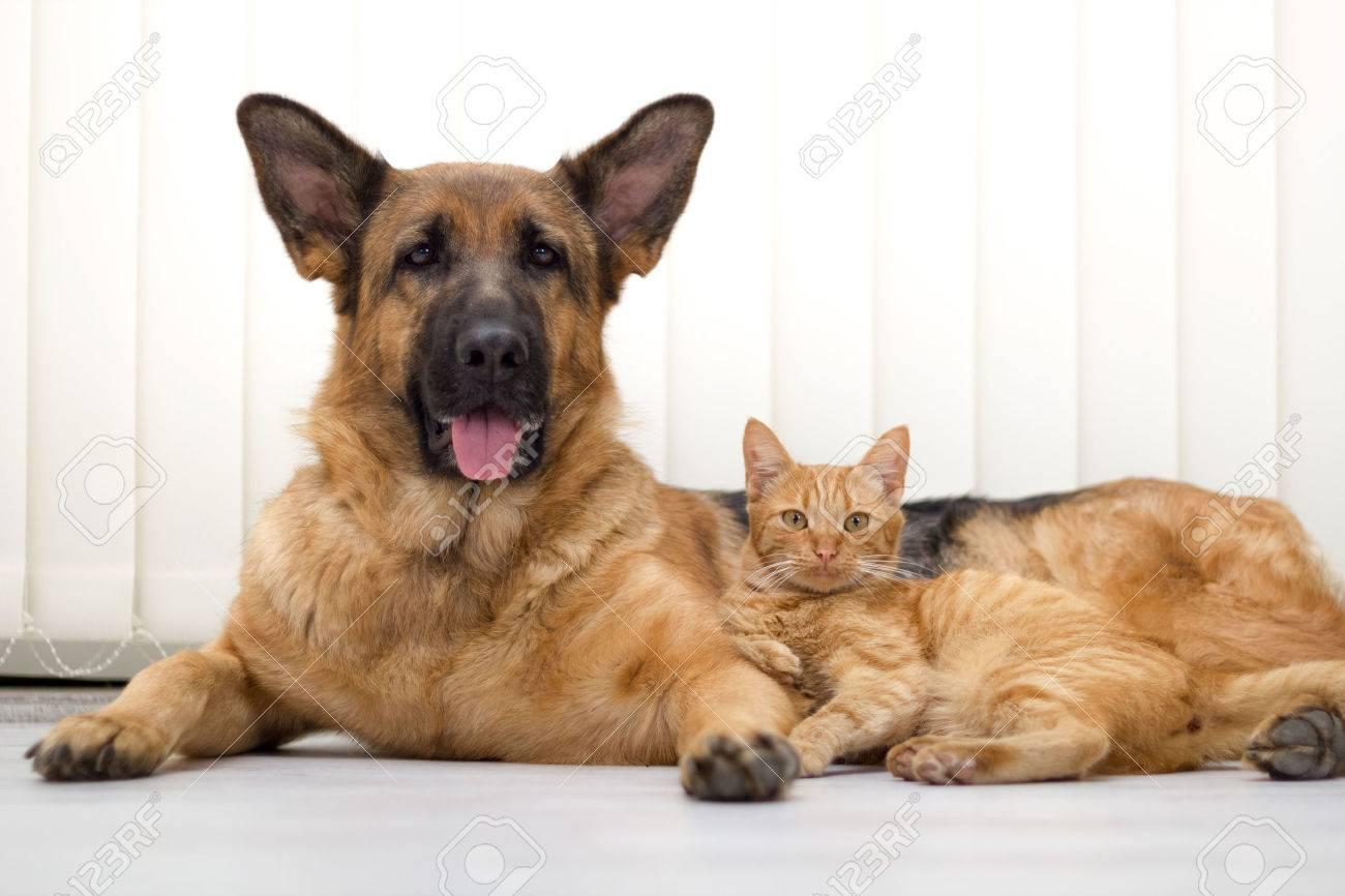 fermer un beau chien et chat couché sur le plancher Banque d'images - 25988274