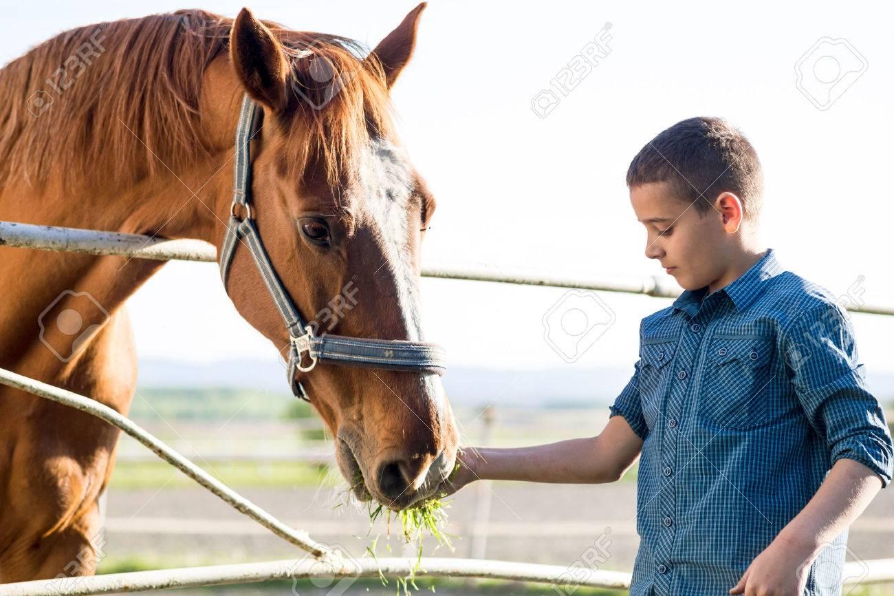 Child feeding beautiful brown horse in a farm - 39658972