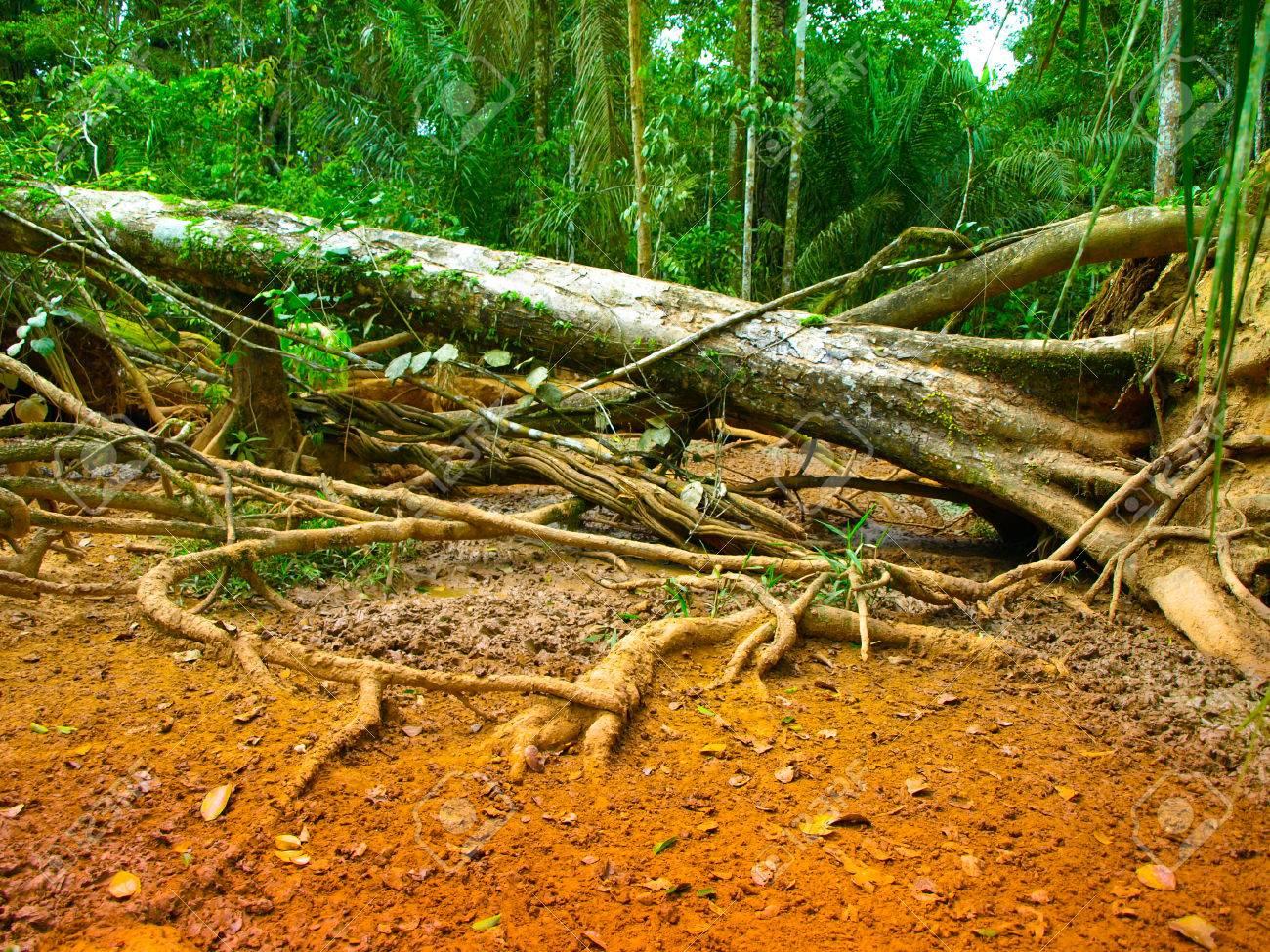 Gefallener Baum Im Amazonas Regenwald Den Kontrast Von Grun Und