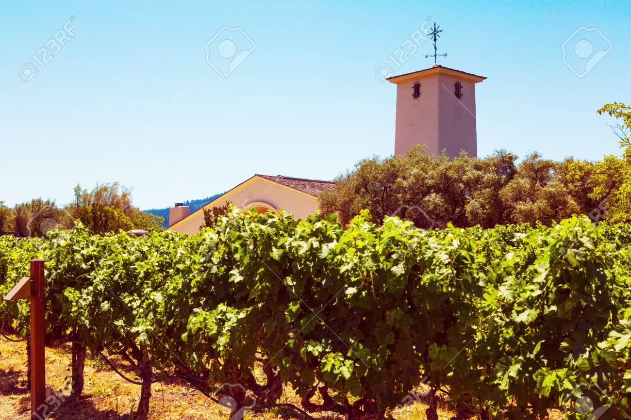 Californian vineyard landscape in Napa Valley in summertime - 97034367
