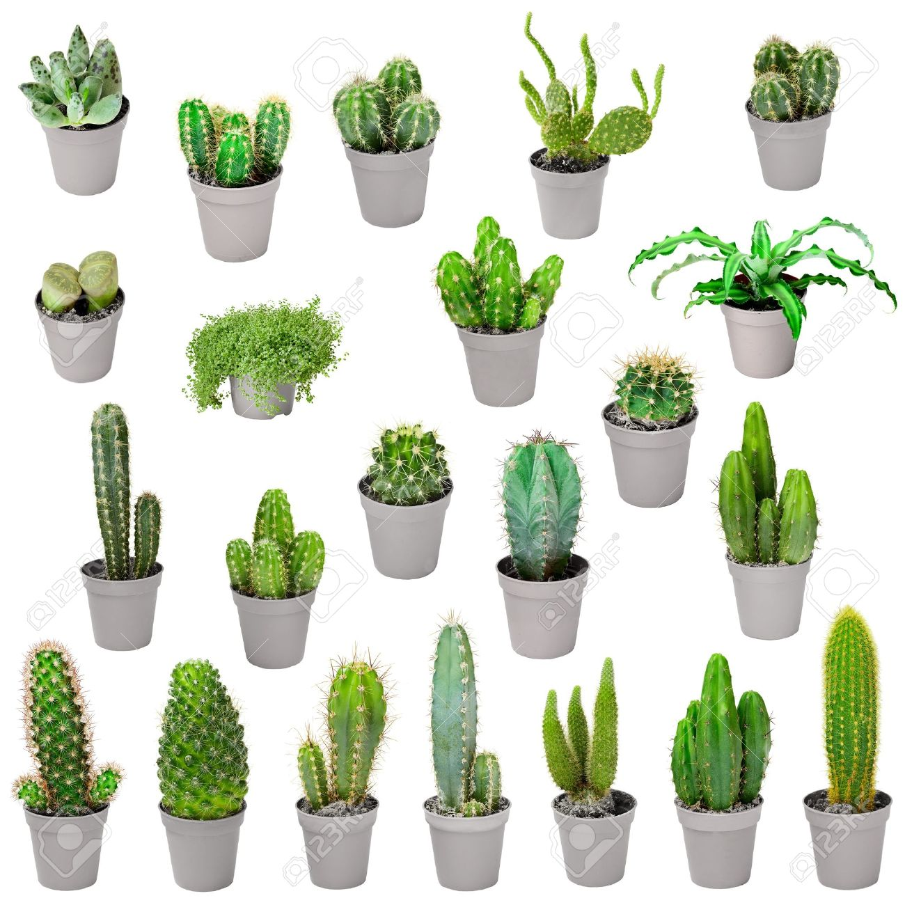 Set Of Indoor Plants In Pots Cacti And Other Succulents Stock Photo Picture And Royalty Free Image Image 17187812