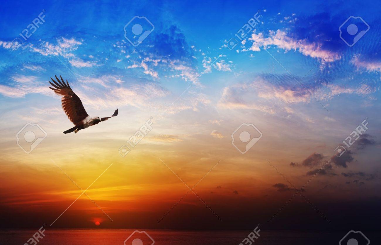 Bird of prey - Brahminy Kite flight on beautiful sunset above the sea background - 21398861