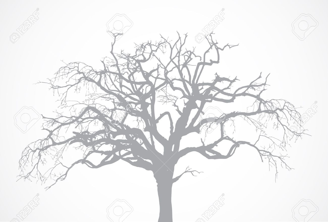 bare old dry dead tree silhouette without leaf vector oak crown