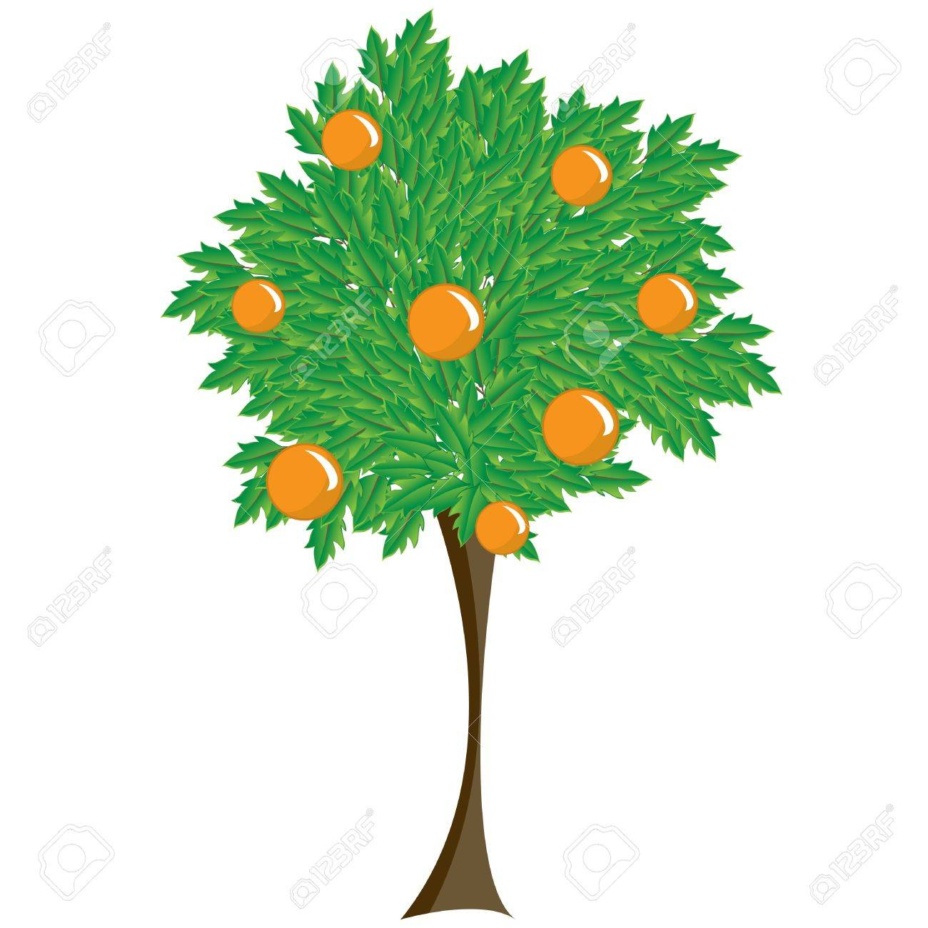 deciduous tree with orange fruit. Illustration on a white background Stock Vector - 7233932