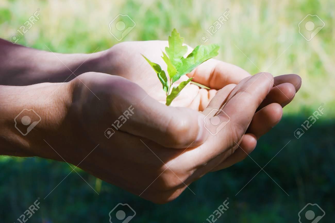 Small green tree oak in human hands Stock Photo - 9604051