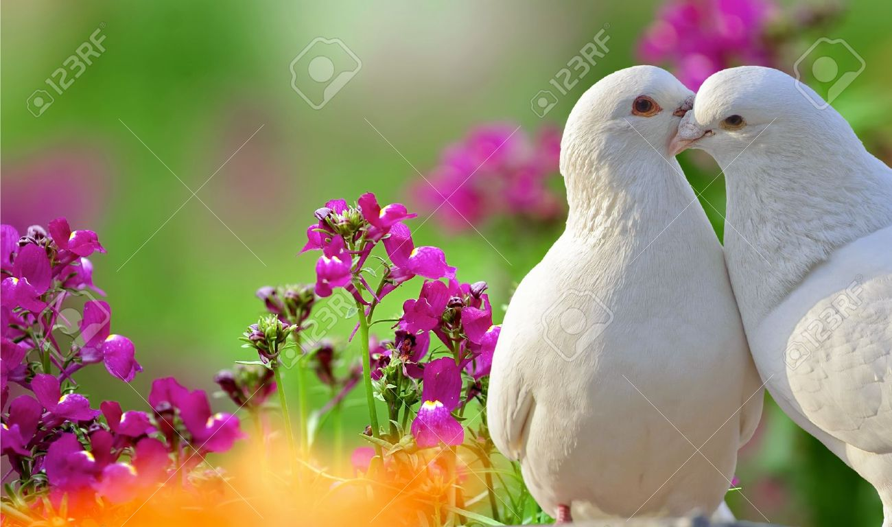 Two Loving White Doves And Beautiful Purple Flowers Stock Photo