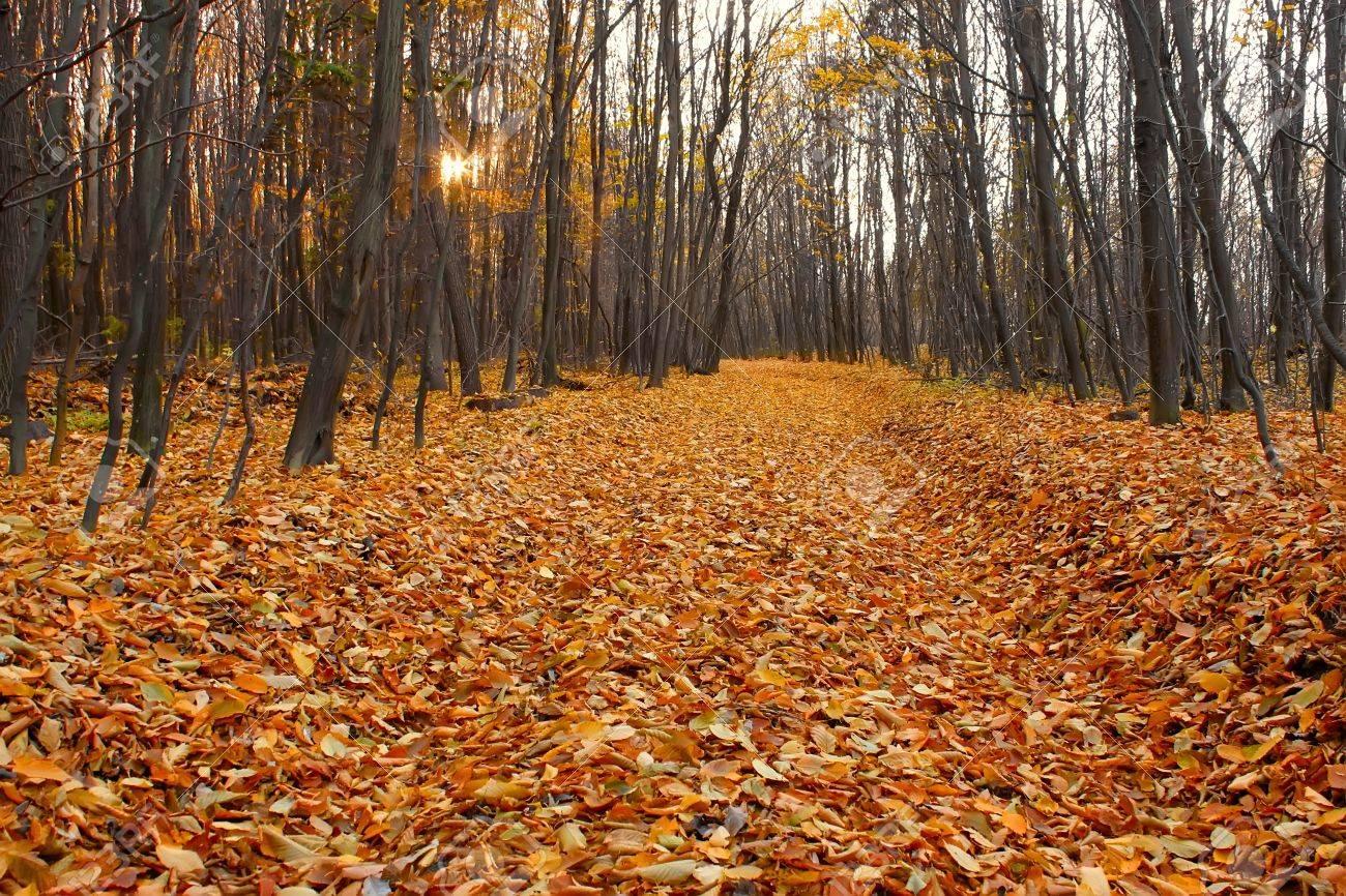 coupe-through dans le bois de charme automne, bordées de couleurs