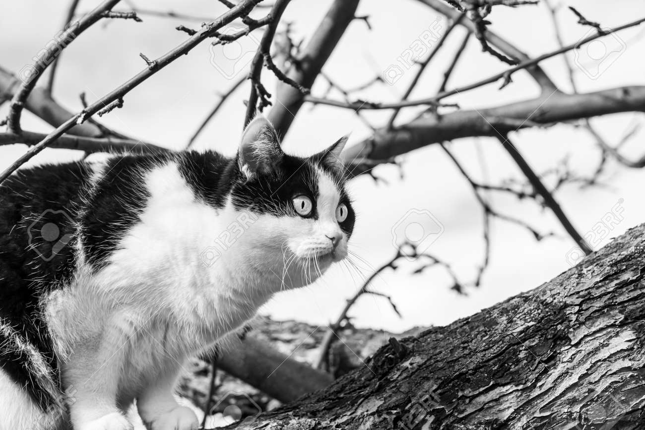 A beautiful adult young black and white cat with big eyes scrambles on a tree in the garden in autumn - 168626931