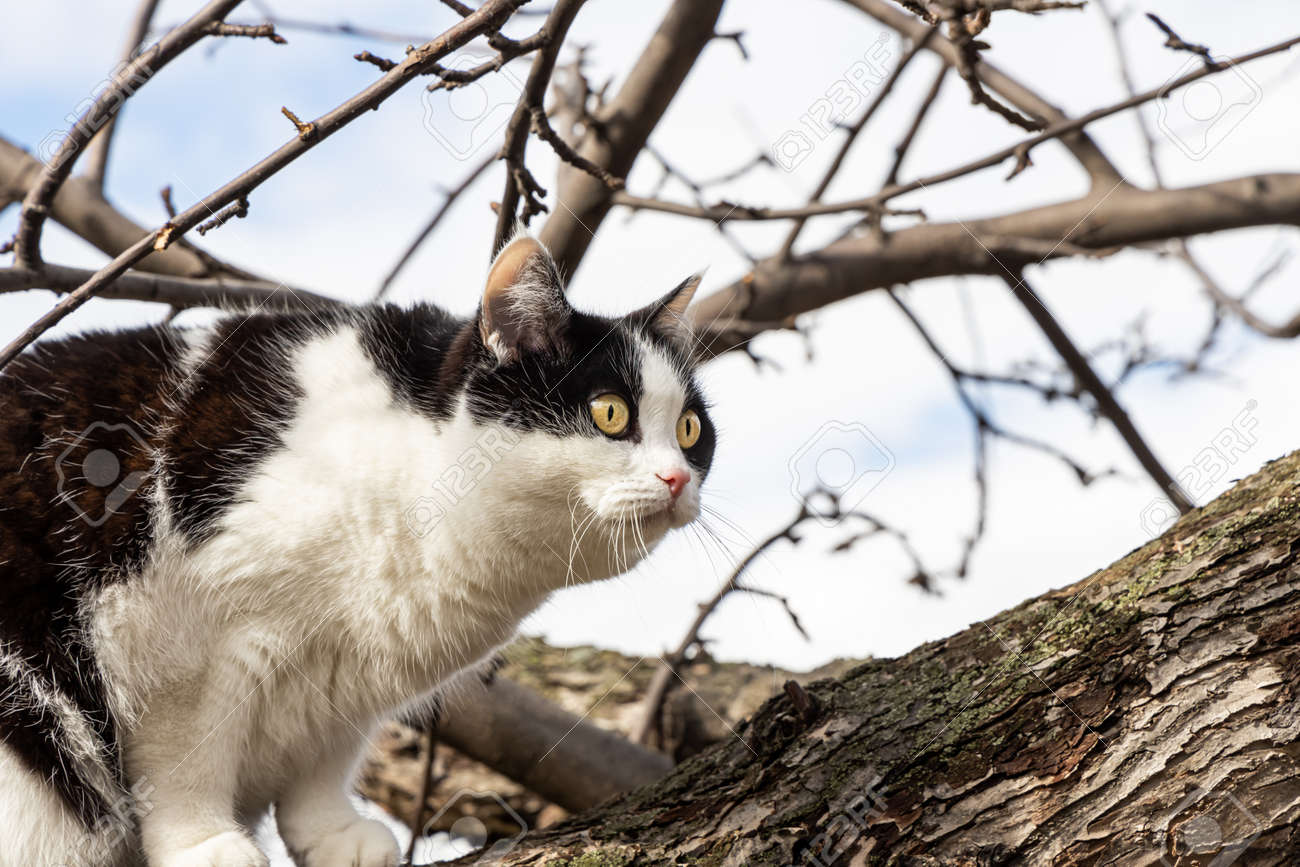 A beautiful adult young black and white cat with big yellow eyes scrambles on a tree in the garden in autumn - 169319567