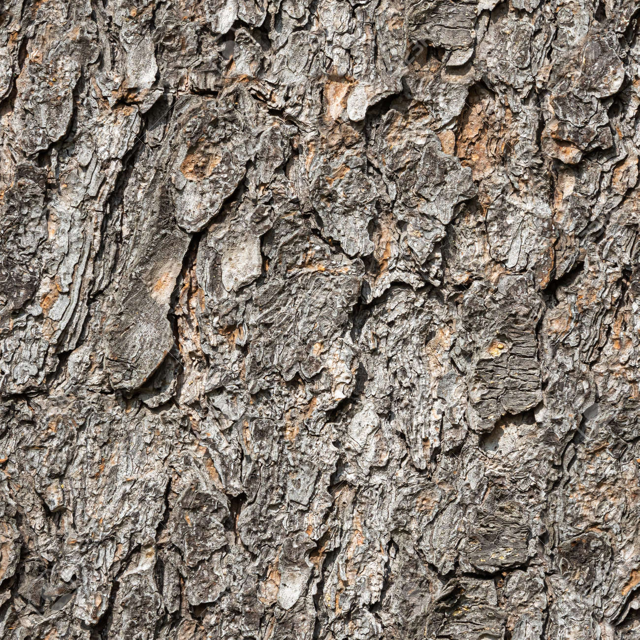 A Seamless pattern of texture of brown bark of old tree with knots and cracks is in the photo - 169319572