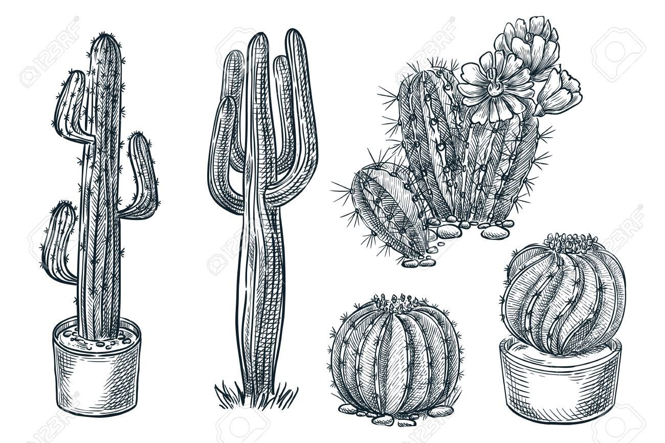 Cactuses And Succulents Vector Sketch Illustration Desert Nature Royalty Free Cliparts Vectors And Stock Illustration Image 117369890
