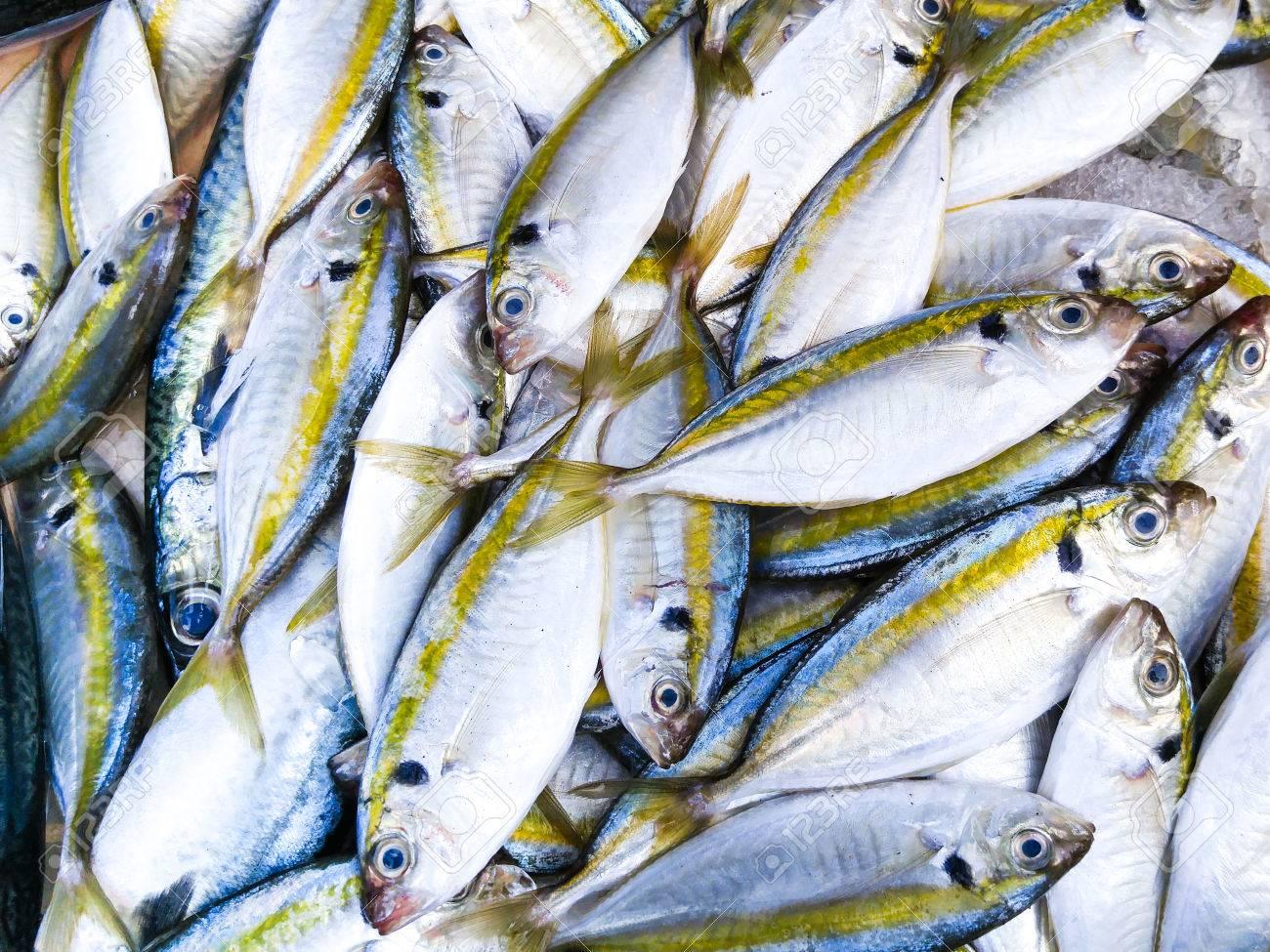 Fresh Sea Fish Wallpaper