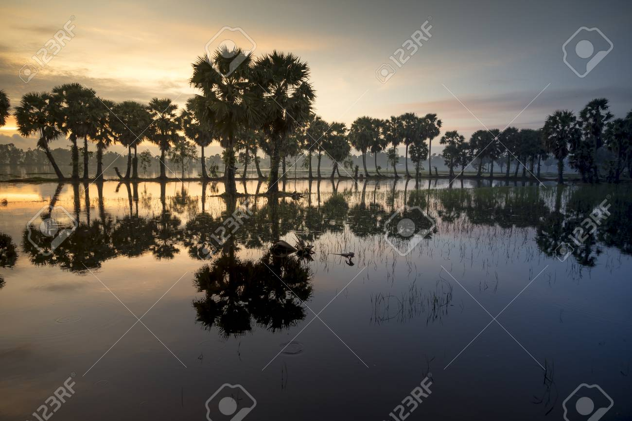 Beautiful landscape of nature with dramatic cloudscape, row of palm trees in silhouette reflect on the surface water of the river at sunrise at Tinh Bien , An Giang province, Mekong Delta, Vietnam - 110638825