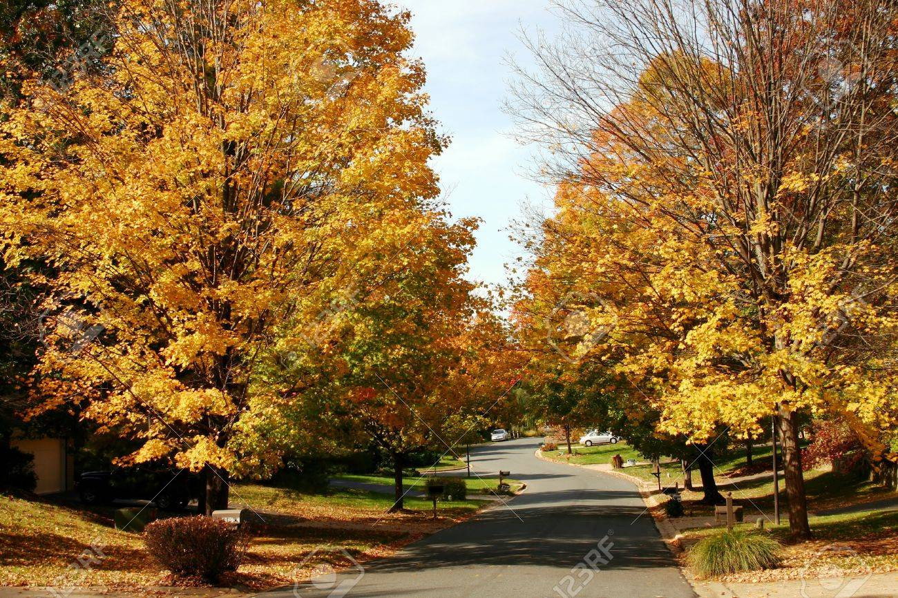 fall foliage in a suburban neighborhood Stock Photo - 11422311