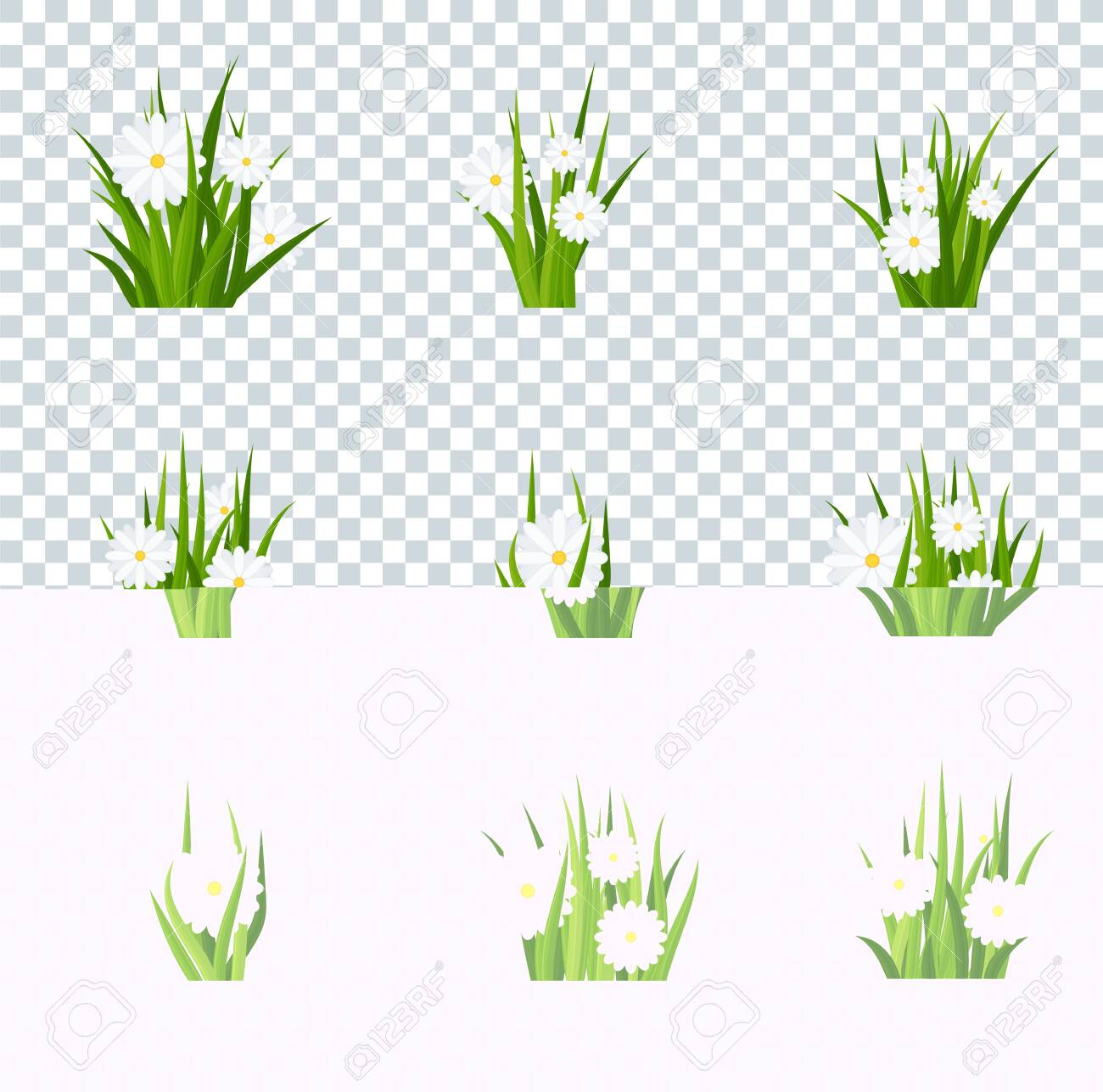 Camomiles in green grass tufts on transparent background  Template