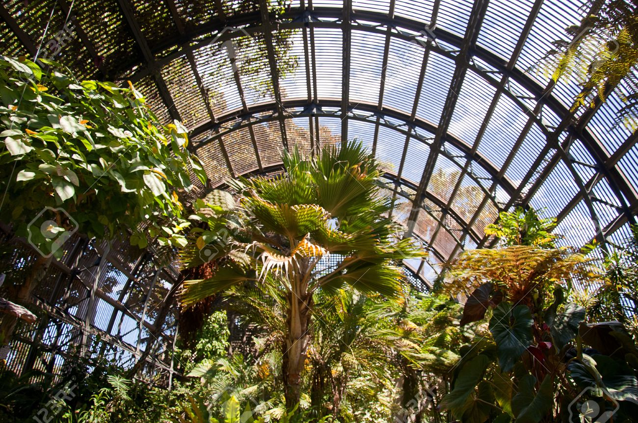 Trees In Botanical Garden Building In Balboa Park In San Diego Stock Photo Picture And Royalty Free Image Image 15543330