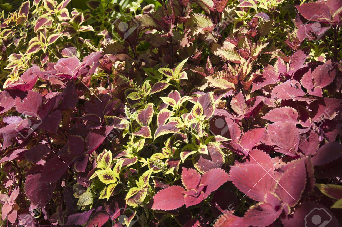 Foliage In Botanical Garden Building In Balboa Park In San Diego ...