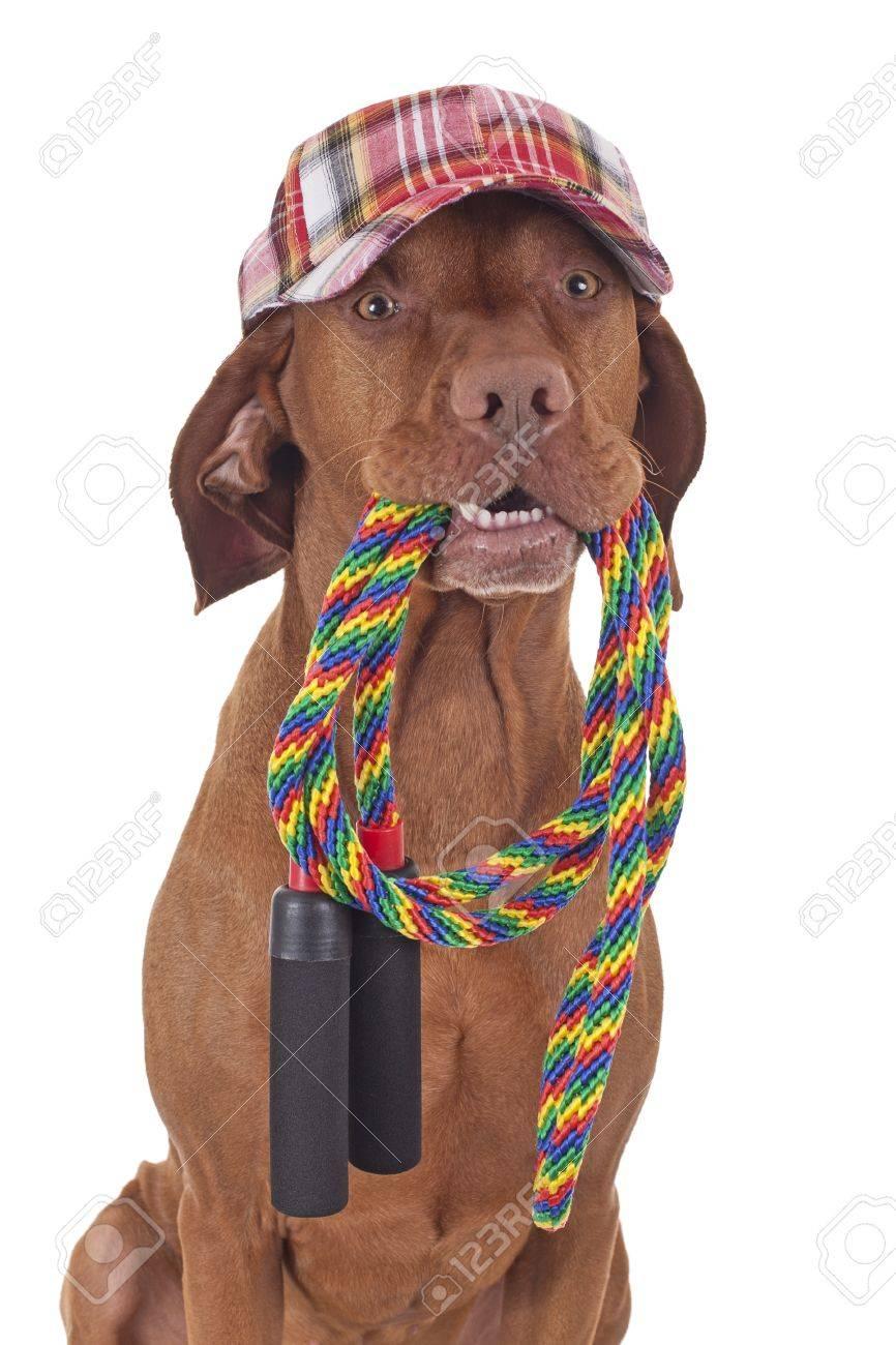 Foto de archivo - Perro con el sombrero de béisbol colorida celebración de  una cuerda que salta en la boca sobre fondo blanco c8130d90fdd