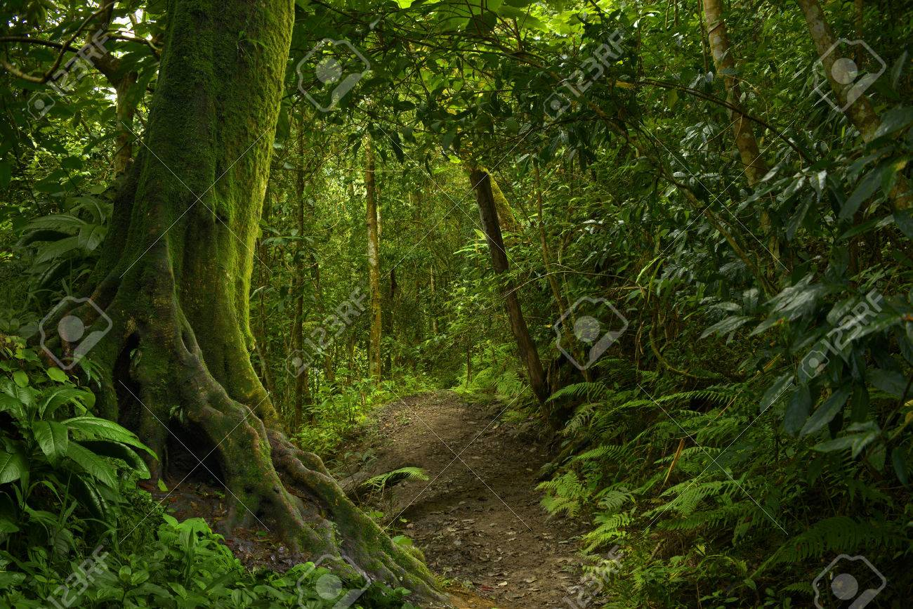 Tropical jungle - 58761984