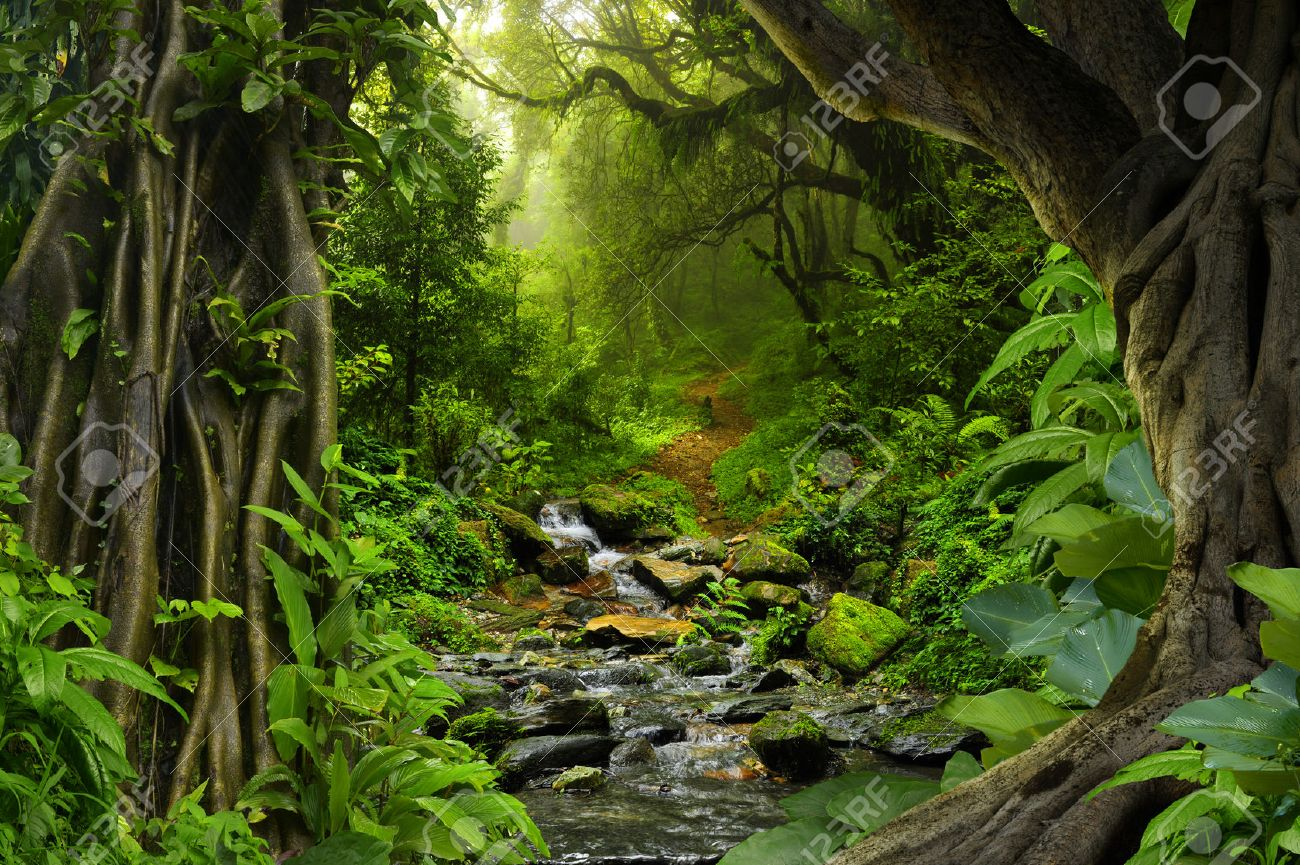 Tropical jungle with river - 68186512
