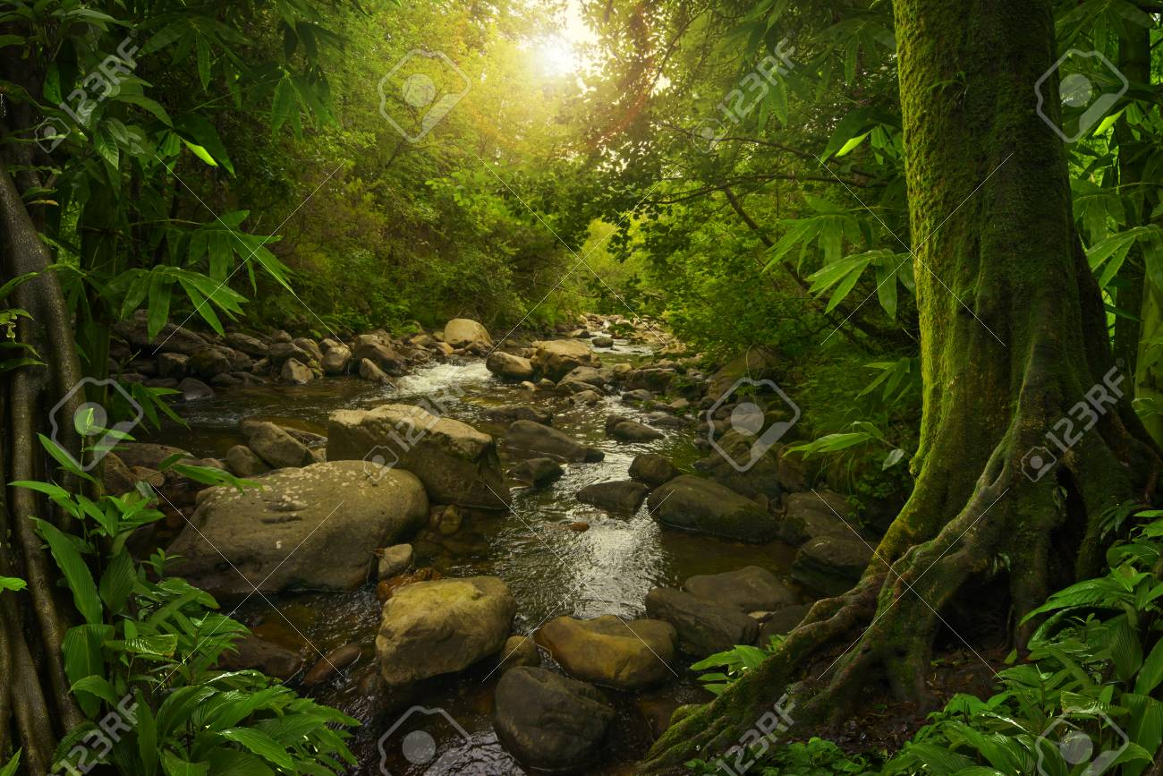 Jungla Tropical Asitica Fotos Retratos Imgenes Y Fotografa De