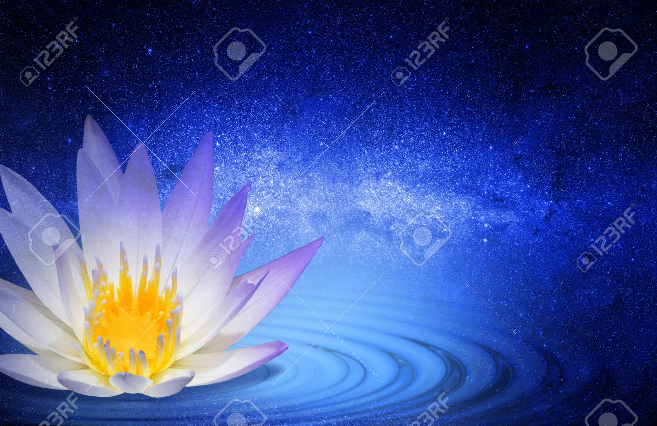 Buddhist Lotus Flower Stock Photo Picture And Royalty Free Image