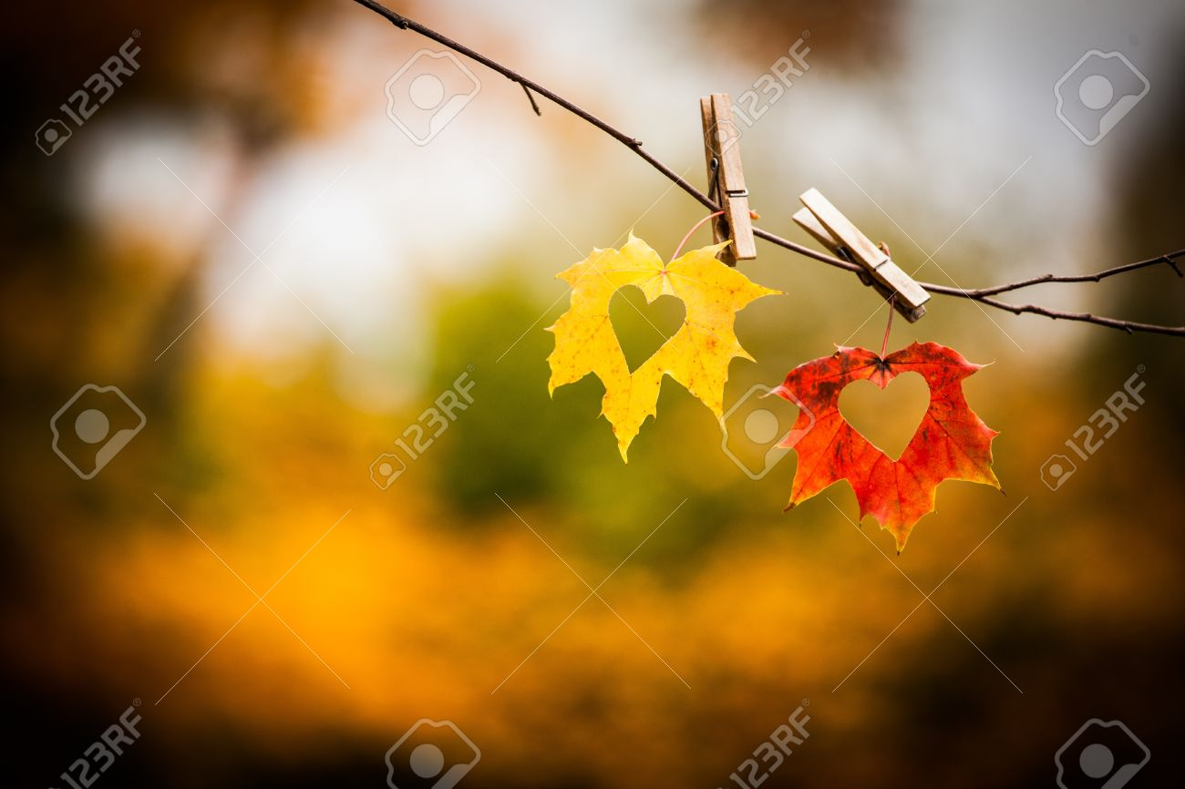 Love hearts cut in colorful autumn leaves on twig with nature background Stock Photo - 16158817