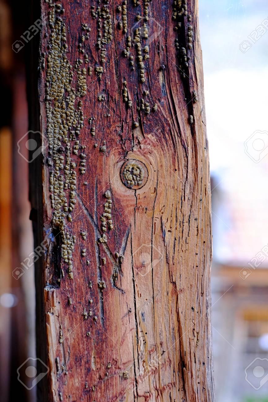 Textur Eines Alten Holzpfosten Zaun, Draht-Hintergrund Textur, Grün ...