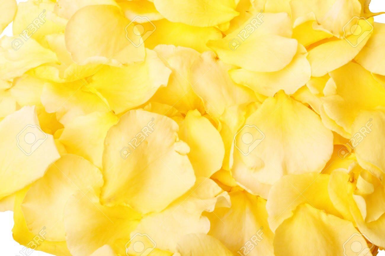 petals of Yellow roses...