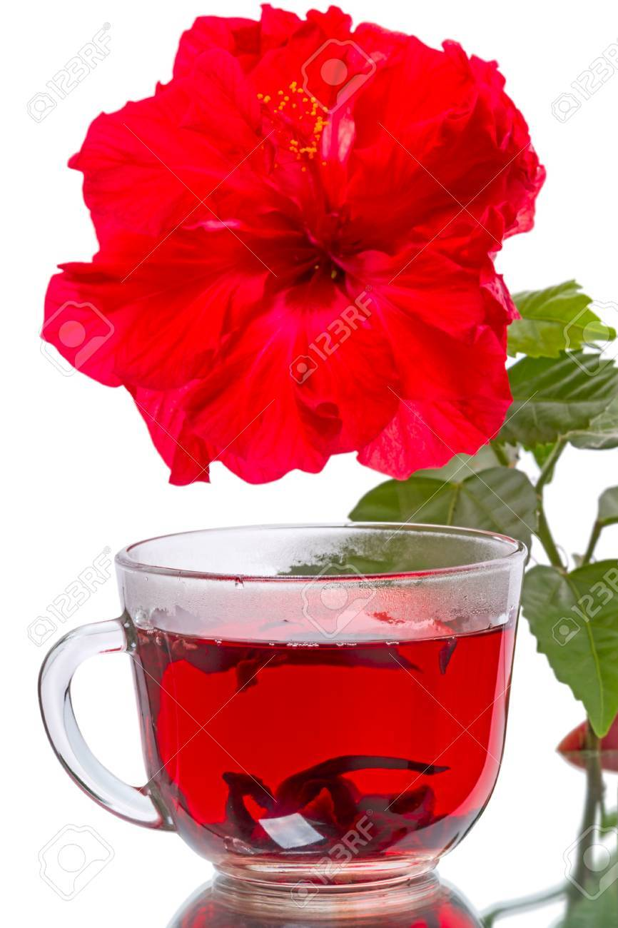 Cup of hot tea and hibiscus flower isolated on white background cup of hot tea and hibiscus flower isolated on white background stock photo 36662476 izmirmasajfo