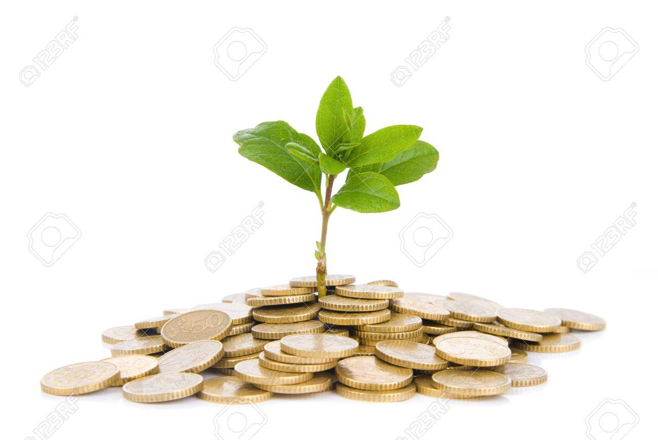 Concept of a plant and a lot of golden coins isolated on white background Stock Photo - 17247868