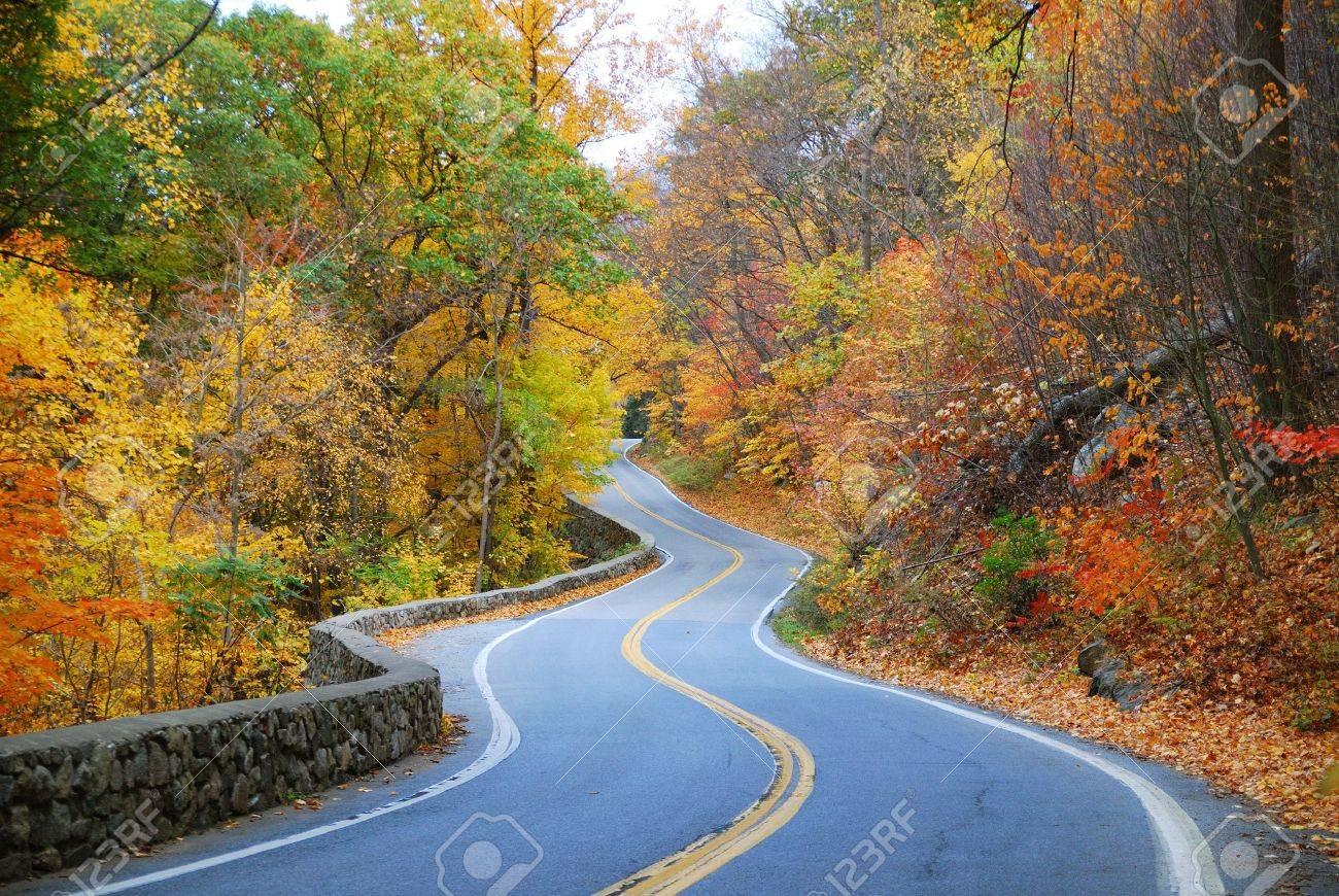 Sinuosa carretera en bosques de otoño con follaje colorido árbol en zona rural. Foto de archivo - 8267644