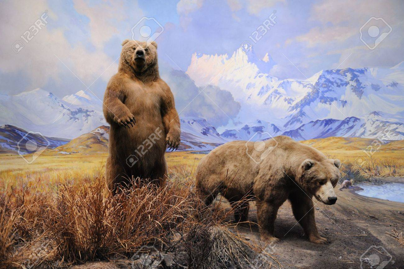 NEW YORK CITY - DEC 5: The American Museum of Natural History, with collections contain over 32 million specimens, is one of the largest and most celebrated museums in the world. December 5, 2010 in Manhattan, New York City.  Stock Photo - 8533037