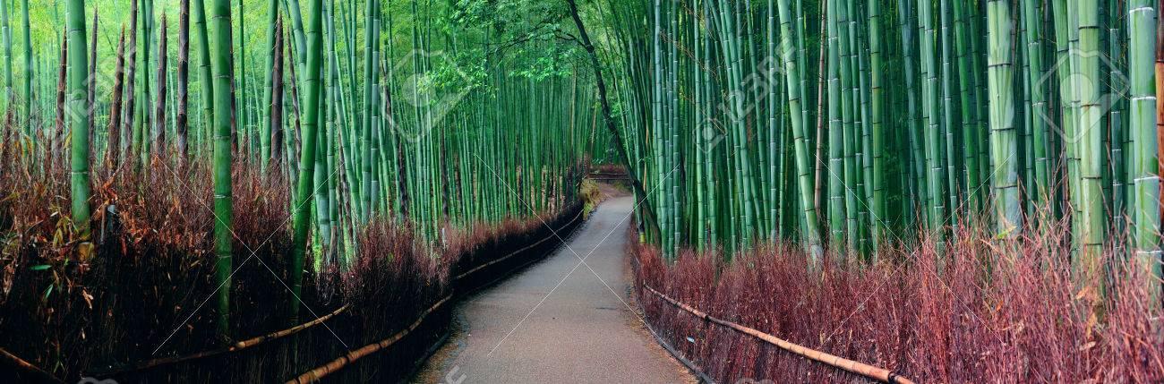 Bamboo Grove panorama in Arashiyama, Kyoto, Japan. - 39423970